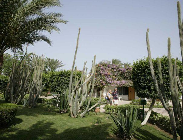 Shams-Safaga-Resort-(87)